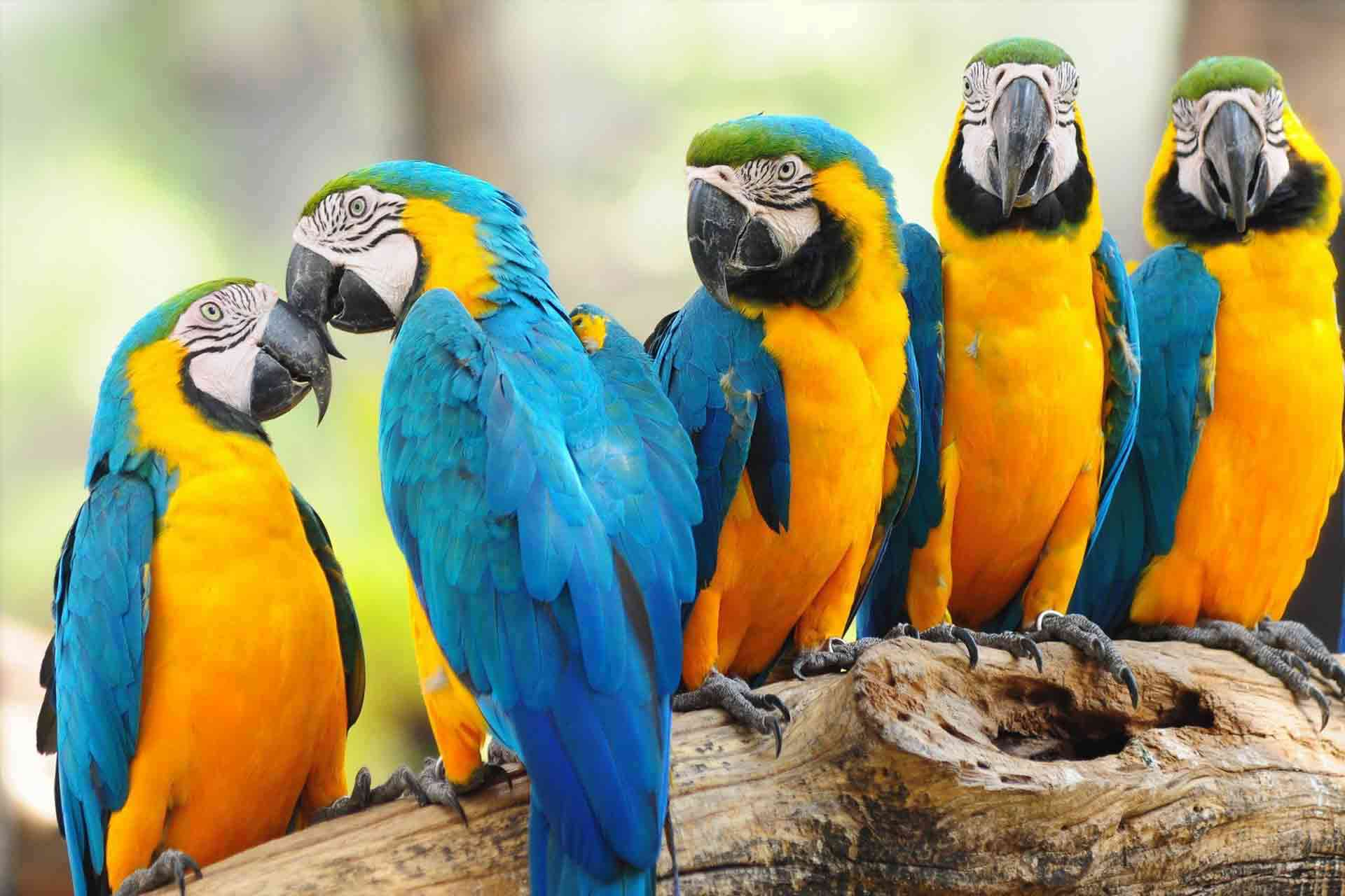 macaw parrots for sale in usa